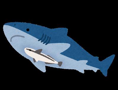 コバンザメ